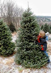 do real christmas trees have bugs live tree recycling growing a greener world tv