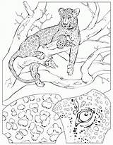 Coloring Animal Pages Habitats Habitat Popular sketch template