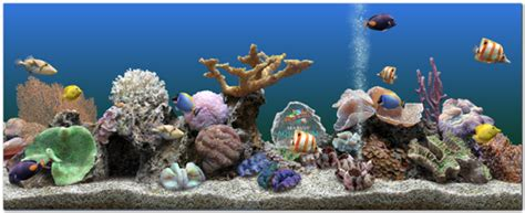 beautiful underwater 3d screensaver marine aquarium 3 0 serial key a2z jntu special