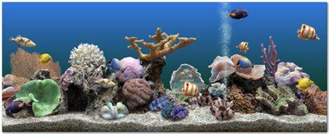 beautiful underwater 3d screensaver marine aquarium 3 0 serial key a2z jntu special