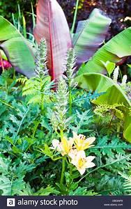 Englischer Garten Pflanzen : acanthus stockfotos acanthus bilder alamy ~ Articles-book.com Haus und Dekorationen