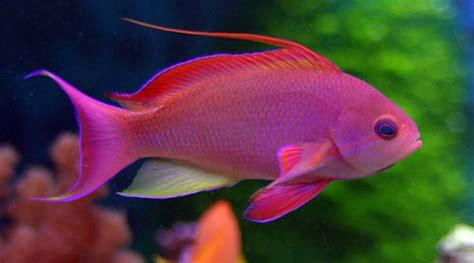 les plus beaux poissons du monde