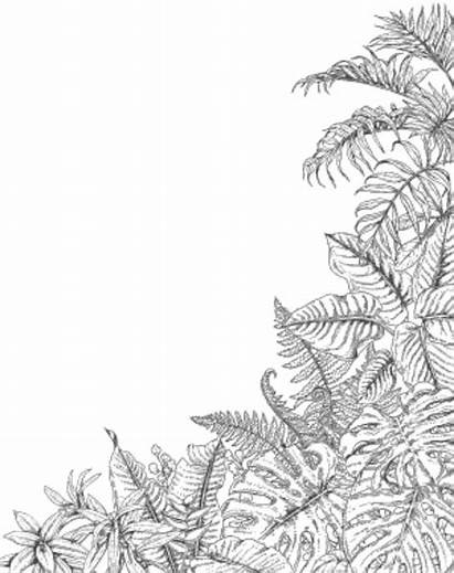 Tropical Fern Corner Plants Sketch Coloring Leaves