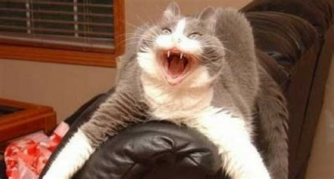 37 Hilarious Major Cat Fails That Will Make Your Day