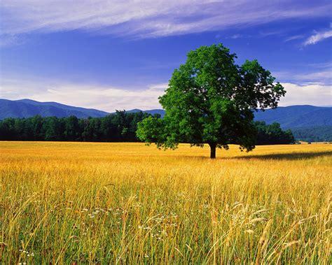nature stills vishvasandvidya