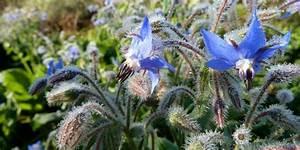 Planter Des Choux Fleurs : quand planter les choux fleurs comment planter des choux chou fleur comment le planter et en ~ Melissatoandfro.com Idées de Décoration