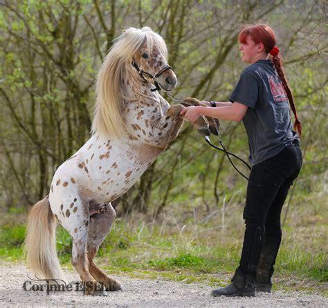 some horses pony most horse miniature dangerous appaloosa mini