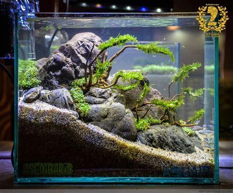 Aquascape Fish Tank by 13394 Best Aquascape Images On Fish Tanks