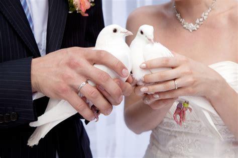 hochzeitstauben ein romantisches ritual