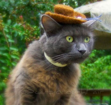 So Hats For Cats Actually Exists Gallery