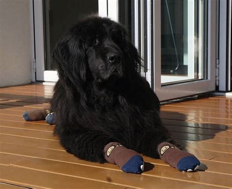 best hardwood floors for dogs best socks for hardwood floors gurus floor 7704
