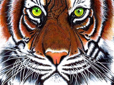 how to paint a l tiger acrylic painting painting by debbie engel