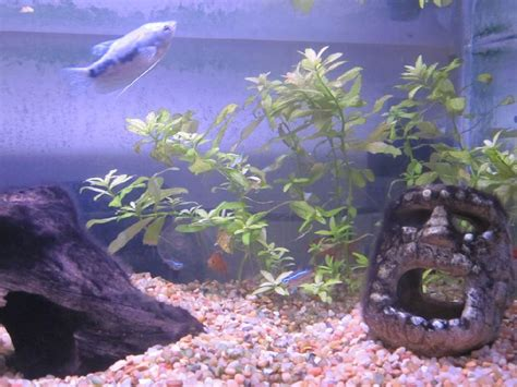 cloudy aquarium water cloudy aquarium water causes and simple solutions infobarrel