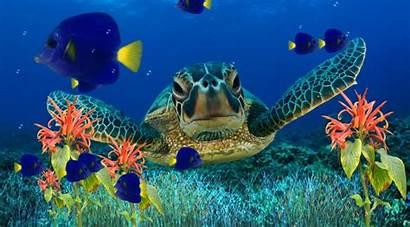 Aquarium 3d Wallpapers Desktop Animated Wallpapersafari