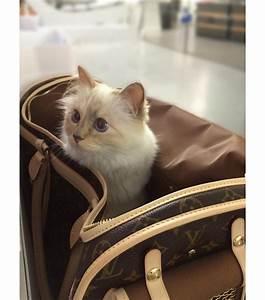Choupette Chat Karl : choupette le chat de karl lagerfeld vanity fair ~ Medecine-chirurgie-esthetiques.com Avis de Voitures