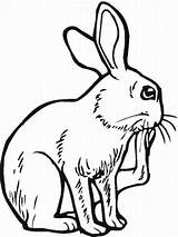 Hutch Coloring Pages Bunny Template Easter sketch template