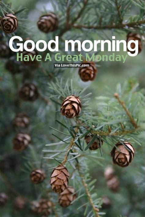good morning   great monday pictures