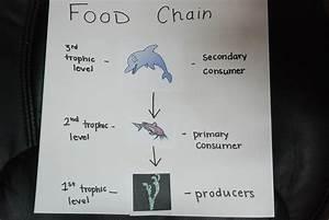 Dolphin Food Web Diagram Related Keywords - Dolphin Food ...