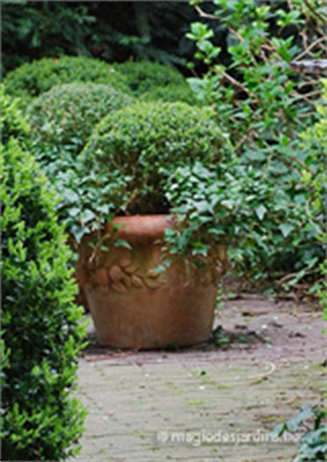 comment bien planter un buis dans un pot de fleurs magie des jardins