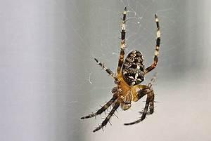 Viele Spinnen Im Haus : spinnen im haus gutes zeichen f r richtiges raumklima ~ Watch28wear.com Haus und Dekorationen