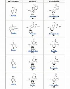 What Is A Nucleoside