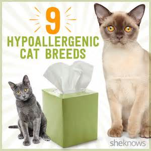 hypoallergenic cats for 8 hypoallergenic cat breeds so you can be a cat