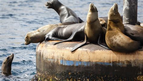 Animals And Plants On The California Coast Sciencing
