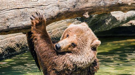 Whales & Bears of British Columbia Grand American Adventures