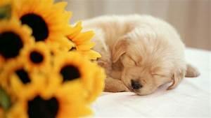 Cute Baby Puppies Sleeping - wallpaper.