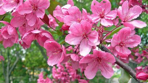 sfondi primavera fiori primavera sfondi 46 immagini