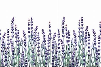 Lavender Watercolor Border Fields Herbs Clip Illustration