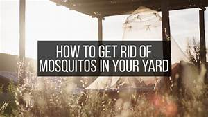 How To Get Rid Of Mosquitoes In Your Yard