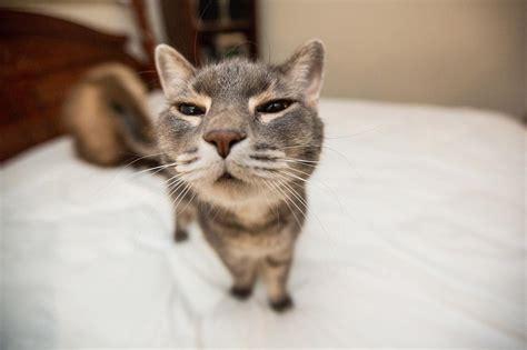 Funny Cats  Part 32 (25 Pics + 10 Gifs)  Amazing Creatures