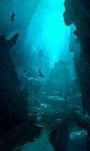Oceanic Trench Underwater | www.pixshark.com - Images ...