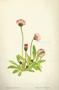 364 best Botanicals images on Pinterest | Botanical ...