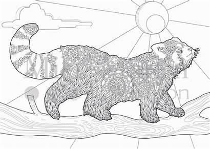 Coloring Pages Panda Printable Adult Colouring Pandas
