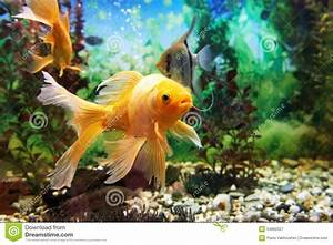 Colorful Fishes In Aquarium Royalty-Free Stock Photography ...