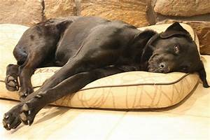 Cheap waterproof dog beds for large dogs a listly list for Cheap waterproof dog beds