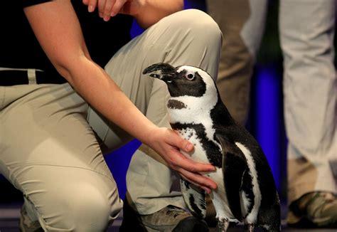 'Jungle' Jack Hanna brings the zoo to UTA for Maverick ...
