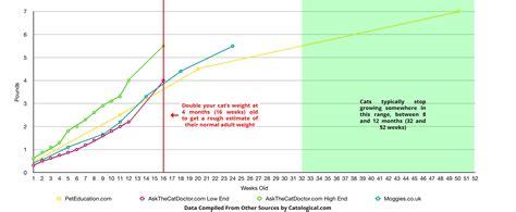 big   kitten     fully grown  growth chart