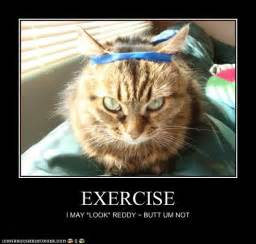 cat exercise fitness cat