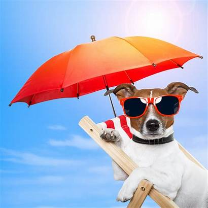 Summer Beach Sunglasses Sun Vacation Umbrella Dog