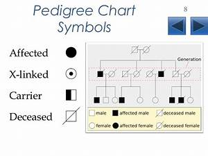 Pedigree Chart Definition - How does a pedigree help us to ...