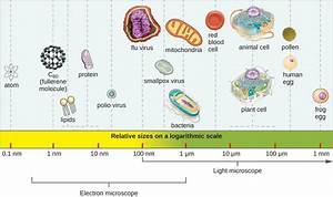 Types Of Microscopes Chart Types Of Microorganisms Microbiology