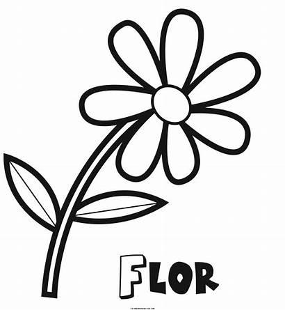 Dibujos Colorear Flores Flor Dibujo Pintar Imprimir