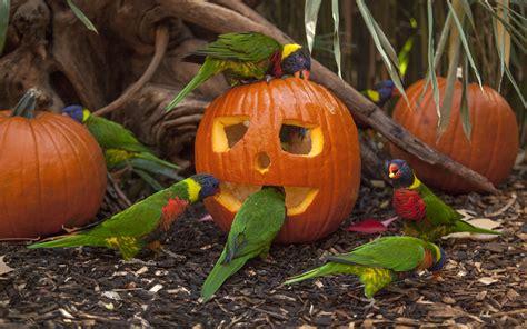 special animal enrichment  halloween
