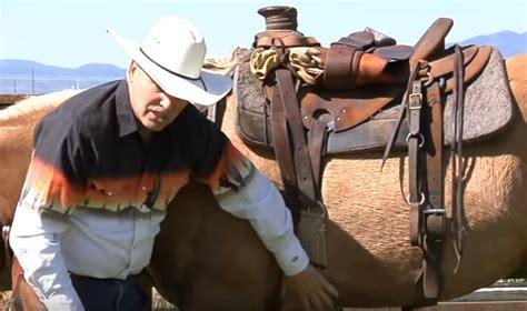 girth galls saddle sores ponybox