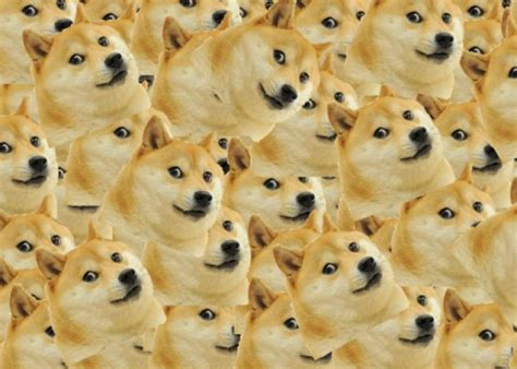 How To Pronounce Doge Meme - doge why we can t agree on how to pronounce the internet meme featuring shiba inus and terse