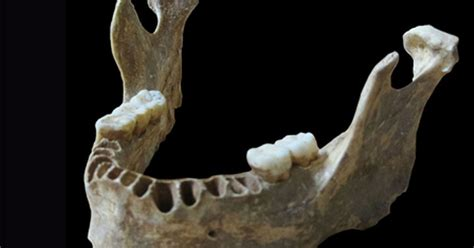 Ancient Jawbone Reveals Neanderthals Bred With Modern