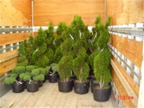 Landscaping Topiary